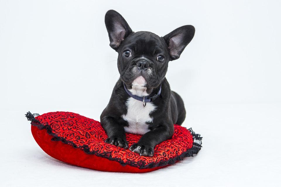 hundehaftpflicht haftpflicht helden